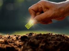 Planting a dollar - Seed Fund 2020
